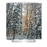 Winter Sun Shower Curtain