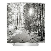Winter Sunshine Forest Shades Of Gray Shower Curtain