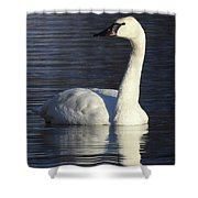 Winter Swan Shower Curtain