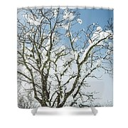 Winter Tree At Berry Summit Shower Curtain