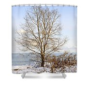 Winter Tree On Shore Shower Curtain