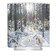 Winter Under The Sun Shower Curtain