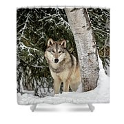 Winter Visitor Shower Curtain