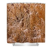 Winter Willow Branches Shower Curtain