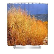 Winter Willows Shower Curtain
