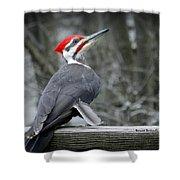 Winter Woodpecker Shower Curtain