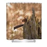 Winter Wren Shower Curtain