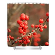 Winterberries On Brown Shower Curtain