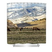 Wintering Grounds Shower Curtain