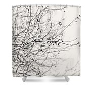 Winter's Berries In Black And White Shower Curtain