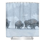 Winter's Burden Shower Curtain by Sandra Bronstein
