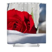 Winters Rose Shower Curtain