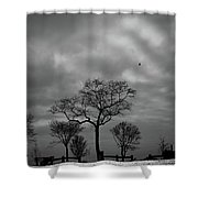 Winter's Trees  Shower Curtain