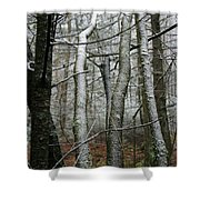 Wintery Day Shower Curtain