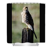 Wintery Cooper Shower Curtain