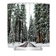 Wintry Forest Drive Shower Curtain