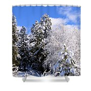 Wintry Morn Shower Curtain