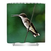 Wire Walker Young Male Ruby-throated Hummingbird    Shower Curtain