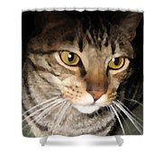 Wise Cat Shower Curtain
