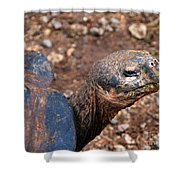 Wise Old Tortoise Shower Curtain
