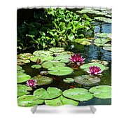 Wishes Among The Water Lilies Shower Curtain