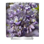 Wisteria 15-02 Shower Curtain