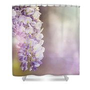Wisteria Flowers In Sunlight Shower Curtain
