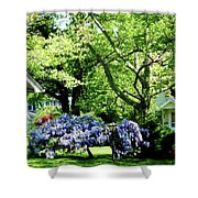 Wisteria On Lawn Shower Curtain
