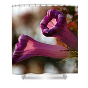With Approach Of Dusk Shower Curtain