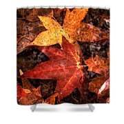 With Love - Autumn Pond Shower Curtain