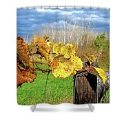 Withered Grape Vine Shower Curtain
