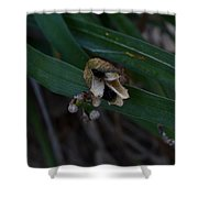 Withering  Shower Curtain