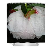 Without Umbrella Shower Curtain