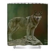 Wolf 0n Look-out Shower Curtain