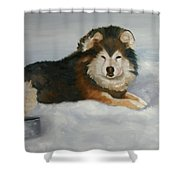 Wolf ,crossed  Shower Curtain
