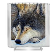 Wolf Dreams Shower Curtain