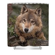 Wolf Face Shower Curtain