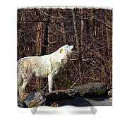 Wolf Howling In Forest Shower Curtain