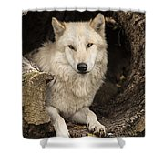 Wolf In A Log Shower Curtain