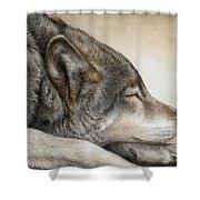 Wolf Nap Shower Curtain
