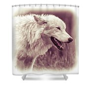 Wolf Of Yellowstone National Park Shower Curtain