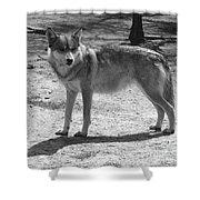 Wolf Pride Shower Curtain
