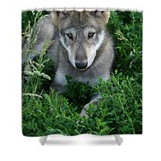 Wolf Pup Portrait Shower Curtain