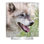 Wolf Smile Shower Curtain