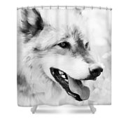 Wolf Smiling Black And White Shower Curtain