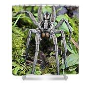 Wolf Spider Hogna Sp Male, Mindo Shower Curtain