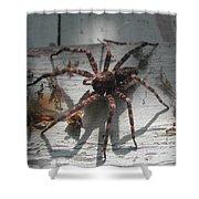 Wolf Spider Sunlight Shower Curtain