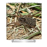 Wolf Spider With Babies Shower Curtain