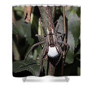 Wolf Spider With Egg Sac Shower Curtain