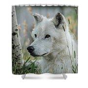 Wolf, White Shower Curtain